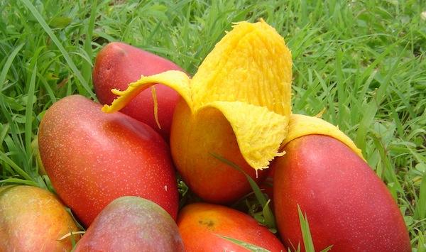 mango beneficios nutricionales